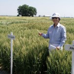 Jianli Chen stands in fields of University of Idaho varieties. Most Western states test new wheat varieties during on-farm trials to determine how they are affected by environmental conditions and how well they could adapt to different farm settings. Photo by Cindy Snyder.