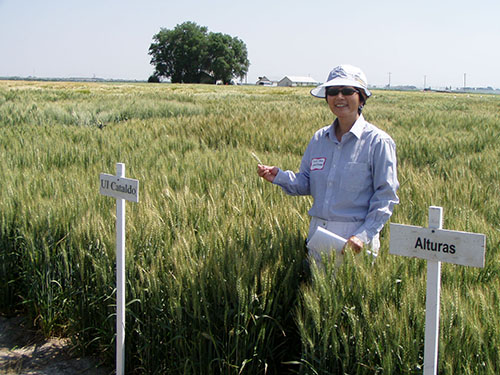 Improving the End-use Quality of Wheat