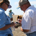 WERA-040 research and outreach has helped rangelands professionals sharpen their skills for identifying ecological sites on rangelands. Photo by Bobbie Davis, NRCS.