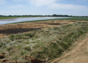 Research plots for the Maryland Port Adminstration Cox Creek dredge study will determine if dredge sediment is suitable for reuse.