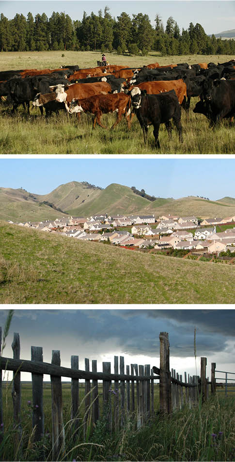 Rangelands provide important grazing land for cattle; however, encroaching housing development and fences marking private property boundaries and public land allotments are dividing the landscape, potentially limiting grazing area as well as wildlife habitat. (Top photo by Wink Crigler. Middle photo by Mark Brunsun, Utah State University. Bottom photo by Rob Lee, Flickr.)