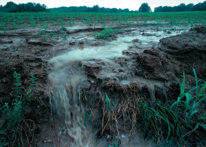 Agrochemicals include pesticides and other chemicals used in crop and livestock production. W-2045 researchers have  studied how chemical residues that runoff into ground and surface waters may harm aquatic organisms. Photo by Lynn Betts, USDA-NRCS.